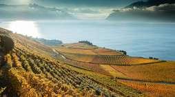 Wijnwandelingen in Zwitserland