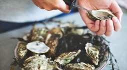 Koester de oester!